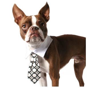 """Ofereça uma gravata (no caso dos machos) ou uma gargantilha como """"Parabéns Papai"""" (no caso das fêmeas)."""